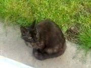 Віддається кішка Муська!!