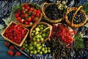Продажа ягод,  овощей,  фруктов.Оптом и в розницу.Доставка по Украине