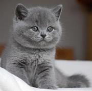 Продам кошку, котёнка