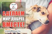 Помощь животным,  питомцам