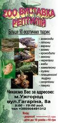 Ручные ящерицы: игуана,  хамелеон,  бородатая агама,  варан и др